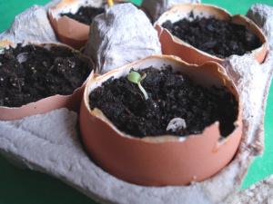 Eggshell Garden for Earth Day