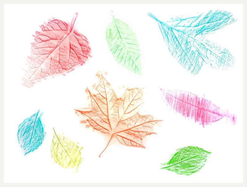 DIY leaf rubbing placemat